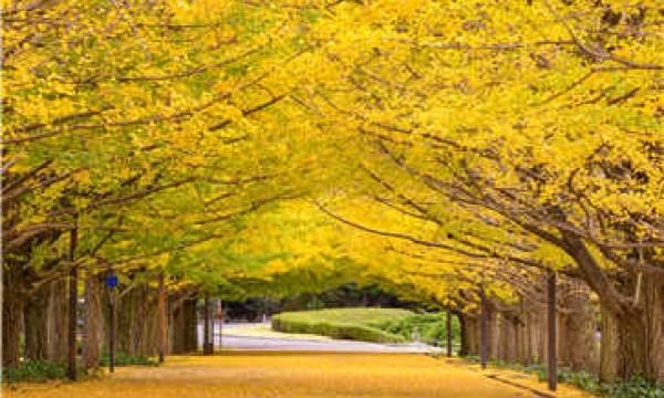 武汉樱花国际日语学校_多少费用_在哪里